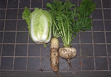 もらいもんの野菜