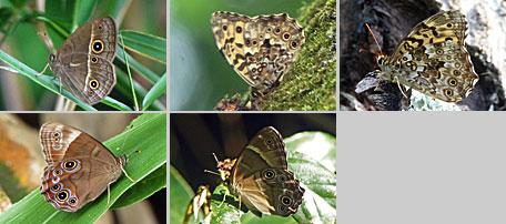 2014年の蝶