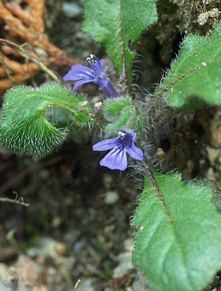 小っこい花