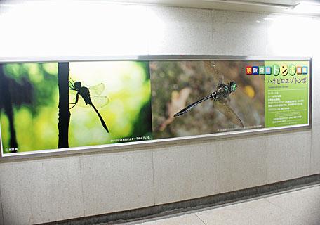 京阪地下道