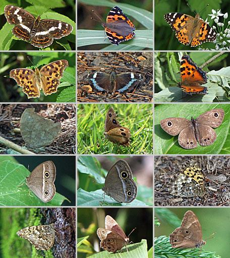 2015年の蝶