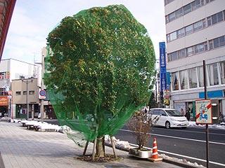 街路樹ネット