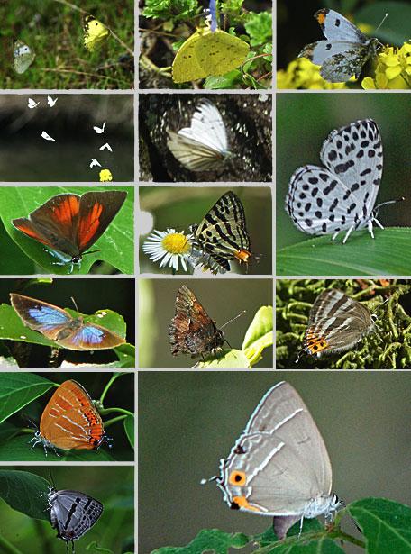 2016年の蝶