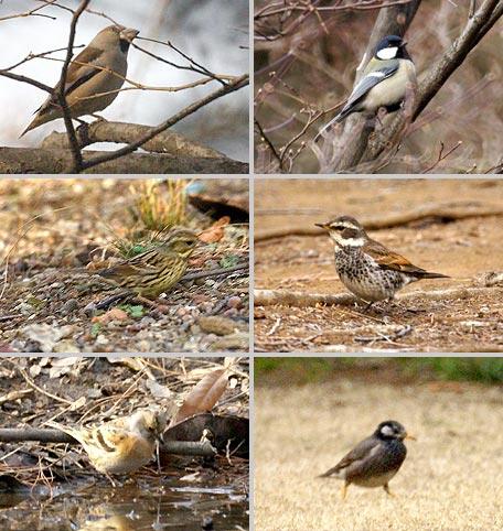 新宿御苑の鳥