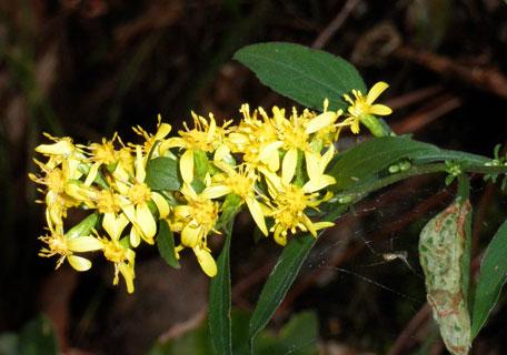 名称不明の花